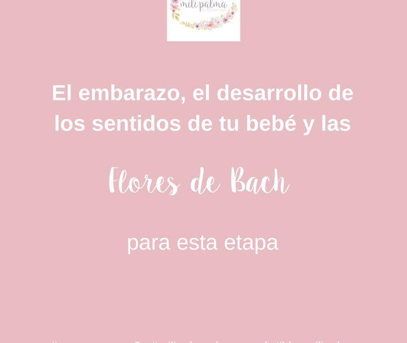 El Embarazo, la relación de los sentidos y el sueño de tu bebé y las Flores de Bach relacionadas con esta etapa.